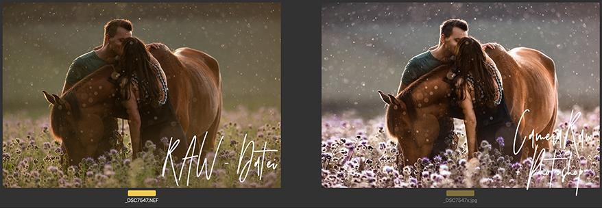 Bildbearbeitung mit Adobe Photoshop bei Alexandra Evang Photographie