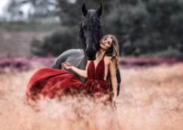 Friesenpferd Talisa in Heidelandschaft fotografiert von Alexandra Evang Photographie